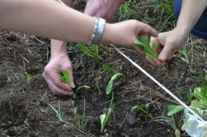 La agricultura social