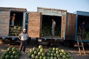 España invierte en seguros agrarios los mismo que toda Latinoamérica